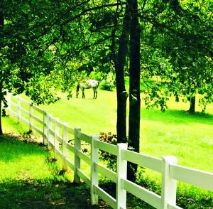 Horse Fence- 3 Rail.39047 (2)